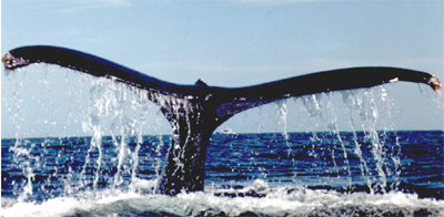 Cape May Whale Watching
